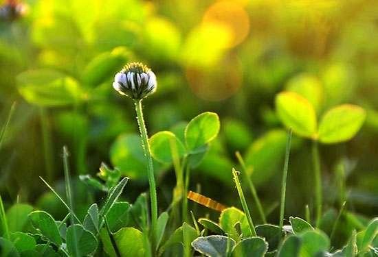 「荐读」像草一样去做人!幸福是自己经营的 包罗万象 第3张